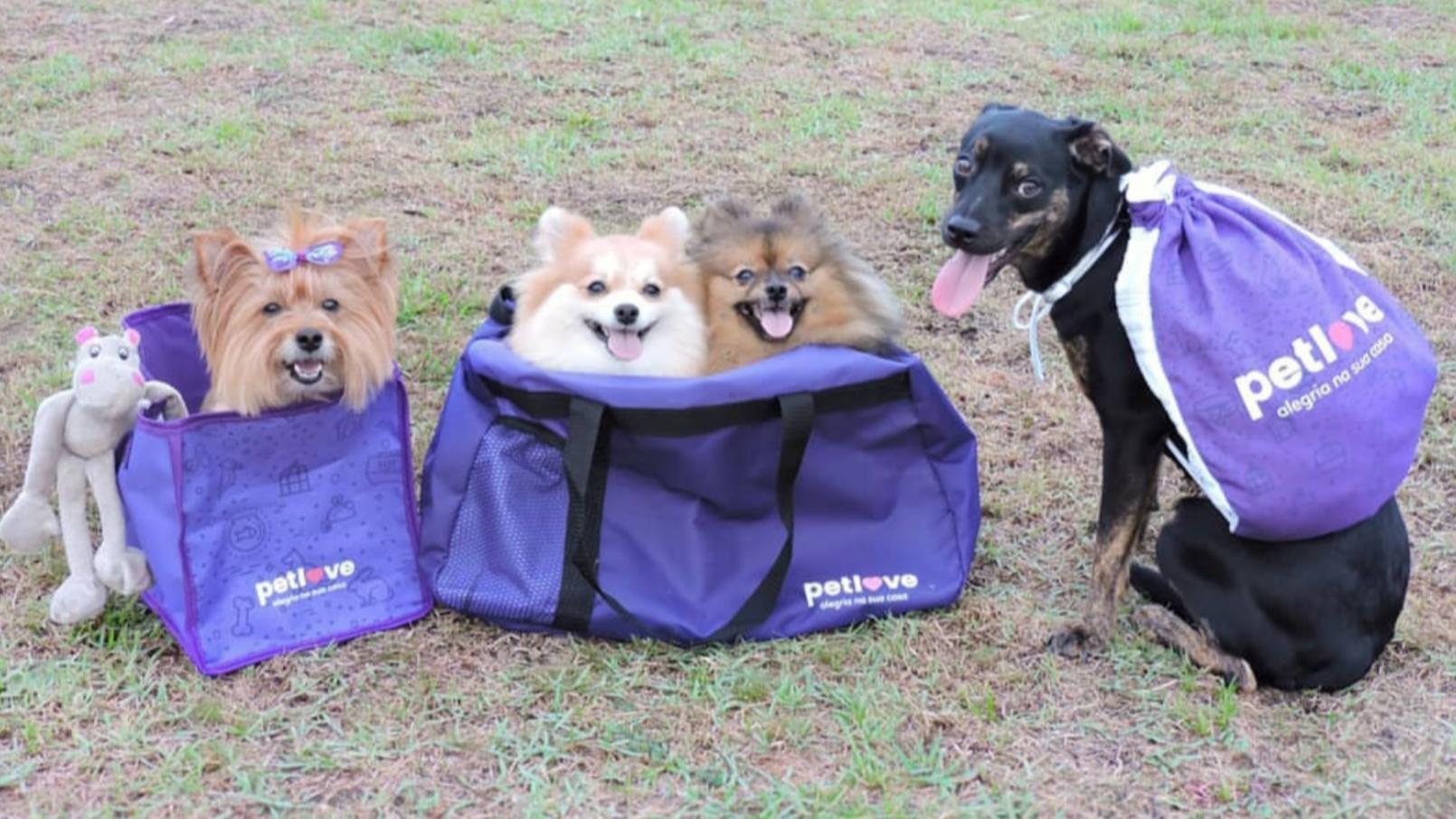 case-petlove-cachorros-creditos-@sweetthree_
